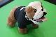 Мягкая игрушка бульдог Mini Bulldog Soft Toy MINI